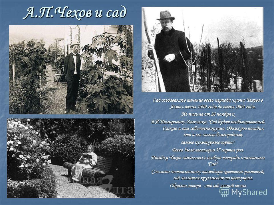 А.П.Чехов и сад Сад создавался в течение всего периода жизни Чехова в Ялте с весны 1899 года до весны 1904 года. Из письма от 26 ноября к В.И.Немировичу-Данченко: