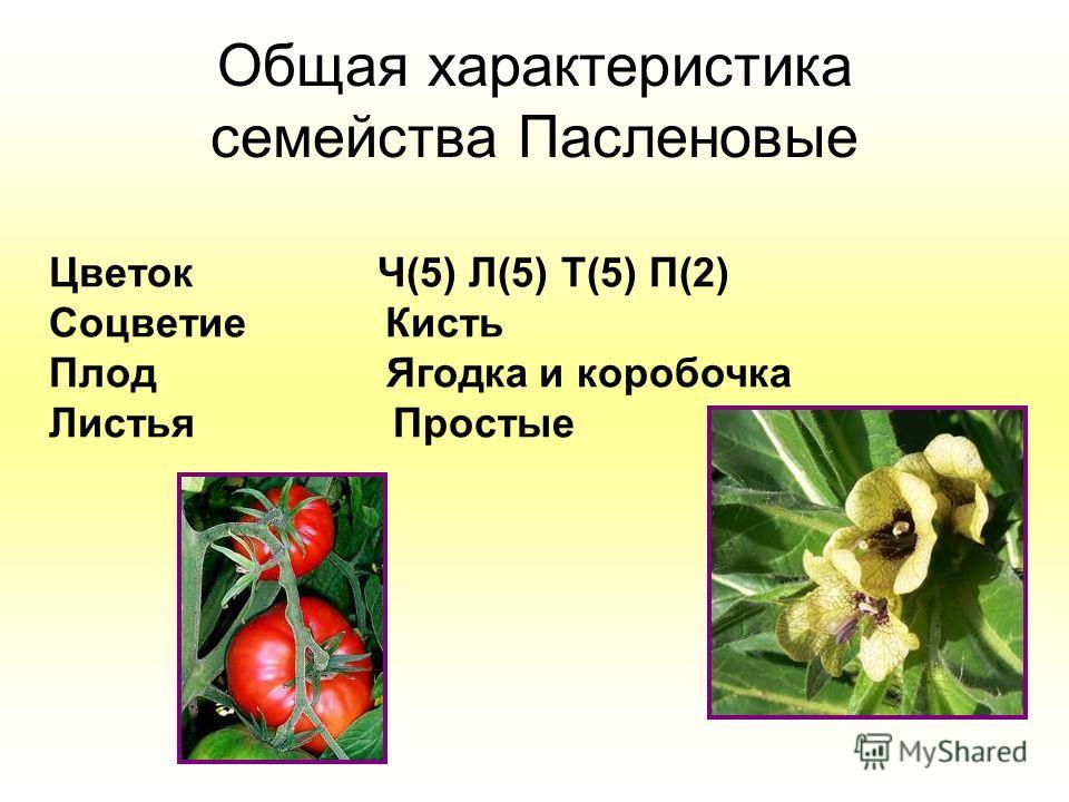 Общая характеристика семейства Пасленовые Цветок Ч(5) Л(5) Т(5) П(2) Соцветие Кисть Плод Ягодка и коробочка Листья Простые