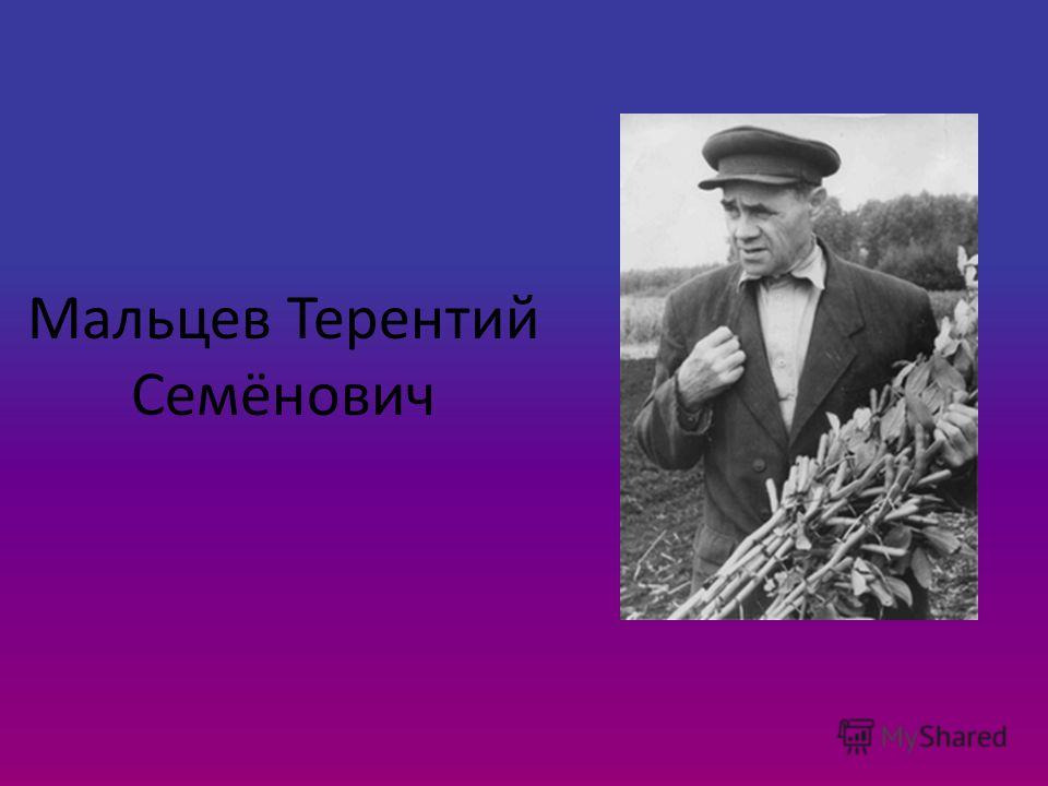 Мальцев Терентий Семёнович