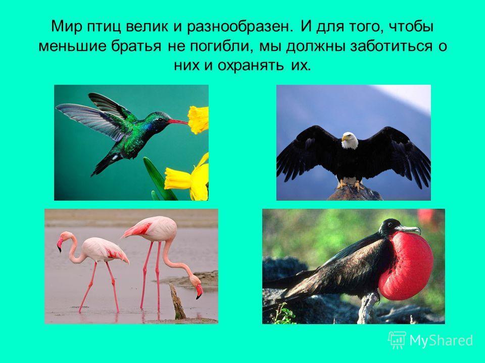 Мир птиц велик и разнообразен. И для того, чтобы меньшие братья не погибли, мы должны заботиться о них и охранять их.