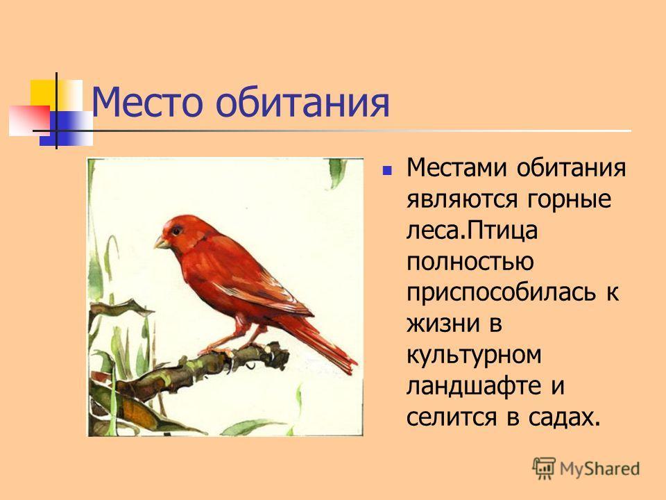 Место обитания Местами обитания являются горные леса.Птица полностью приспособилась к жизни в культурном ландшафте и селится в садах.