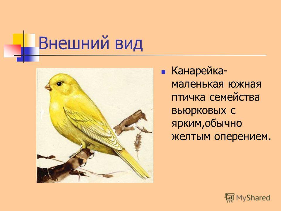 Внешний вид Канарейка- маленькая южная птичка семейства вьюрковых с ярким,обычно желтым оперением.