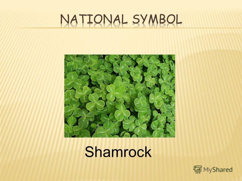 Shamrock