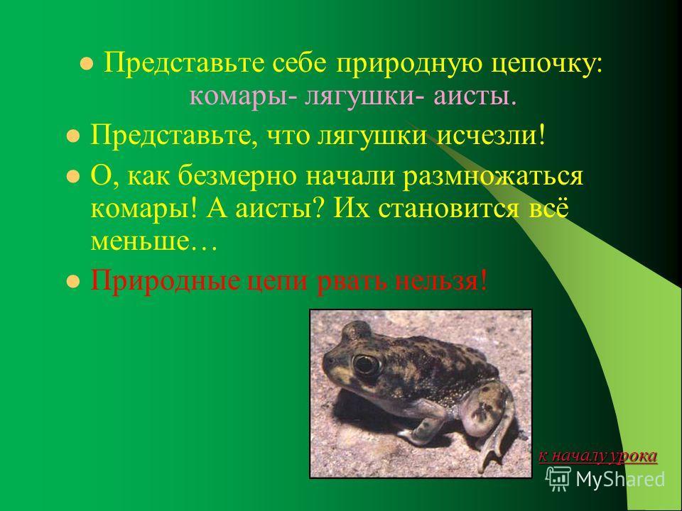 к началу урока к началу урока Лягушки и жабы- хранители равновесия в природе. Но равновесие зависит не только от того, кого и в каком количестве поедают лягушки и жабы. Оно зависит и от того, кто и в каком количестве поедает самих лягушек и жаб. А по