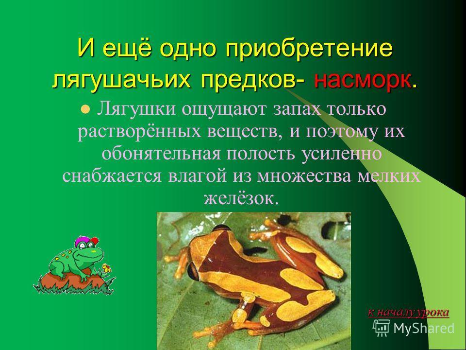 к началу урока к началу урока Лягушки- первые слюнтяи планеты. Это не каприз: чтобы на суше можно было глотать сухую добычу, потребовалась смазка- слюна. Она у лягушки жидкая, водянистая, ферментов в ней нет.