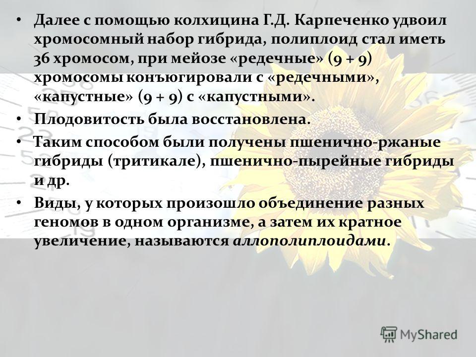 Далее с помощью колхицина Г.Д. Карпеченко удвоил хромосомный набор гибрида, полиплоид стал иметь 36 хромосом, при мейозе «редечные» (9 + 9) хромосомы конъюгировали с «редечными», «капустные» (9 + 9) с «капустными». Плодовитость была восстановлена. Та
