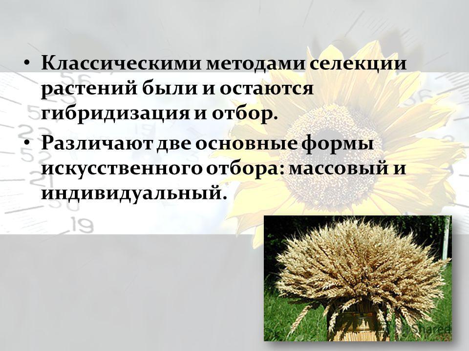Классическими методами селекции растений были и остаются гибридизация и отбор. Различают две основные формы искусственного отбора: массовый и индивидуальный.