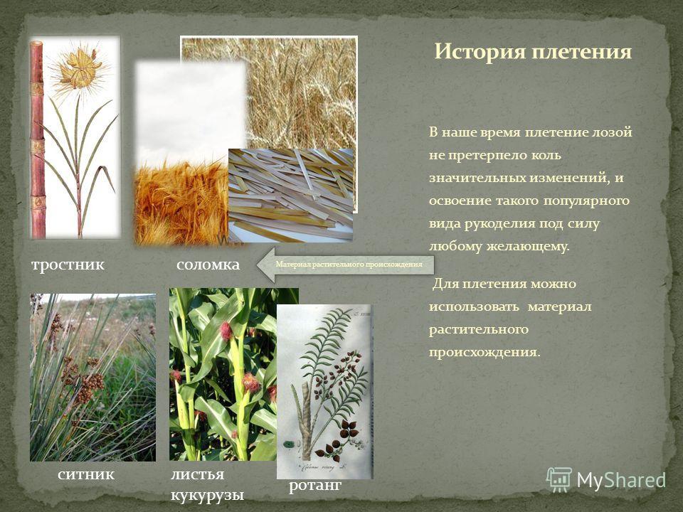 В наше время плетение лозой не претерпело коль значительных изменений, и освоение такого популярного вида рукоделия под силу любому желающему. Для плетения можно использовать материал растительного происхождения. тростниксоломка ситниклистья кукурузы