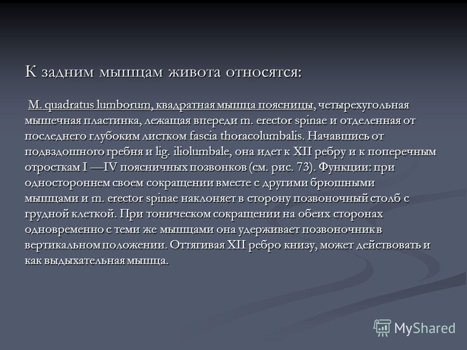 К задним мышцам живота относятся: М. quadratus lumborum, квадратная мышца поясницы, четырехугольная М. quadratus lumborum, квадратная мышца поясницы, четырехугольная мышечная пластинка, лежащая впереди m. erector spinae и отделенная от последнего глу