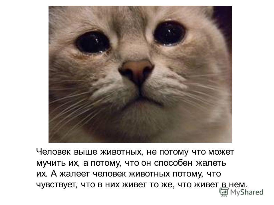 Человек выше животных, не потому что может мучить их, а потому, что он способен жалеть их. А жалеет человек животных потому, что чувствует, что в них живет то же, что живет в нем.