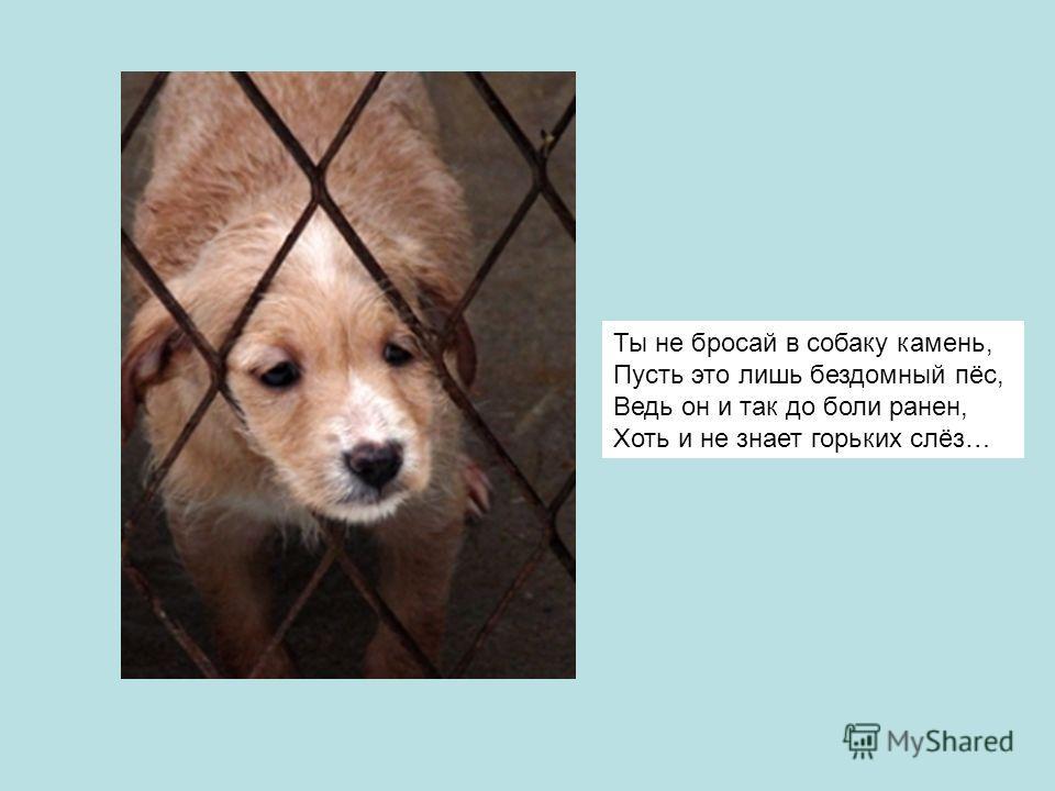 Ты не бросай в собаку камень, Пусть это лишь бездомный пёс, Ведь он и так до боли ранен, Хоть и не знает горьких слёз…