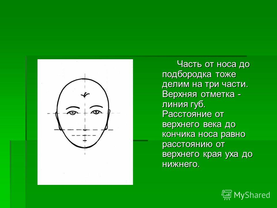 Часть от носа до подбородка тоже делим на три части. Верхняя отметка - линия губ. Расстояние от верхнего века до кончика носа равно расстоянию от верхнего края уха до нижнего. Часть от носа до подбородка тоже делим на три части. Верхняя отметка - лин