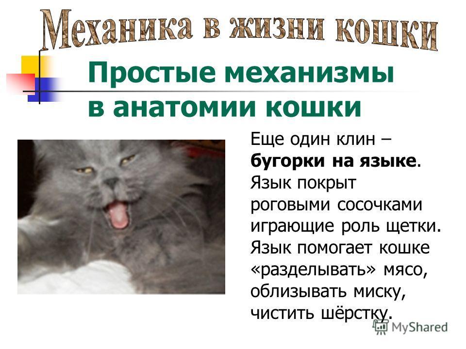 Простые механизмы в анатомии кошки Еще один клин – бугорки на языке. Язык покрыт роговыми сосочками играющие роль щетки. Язык помогает кошке «разделывать» мясо, облизывать миску, чистить шёрстку.