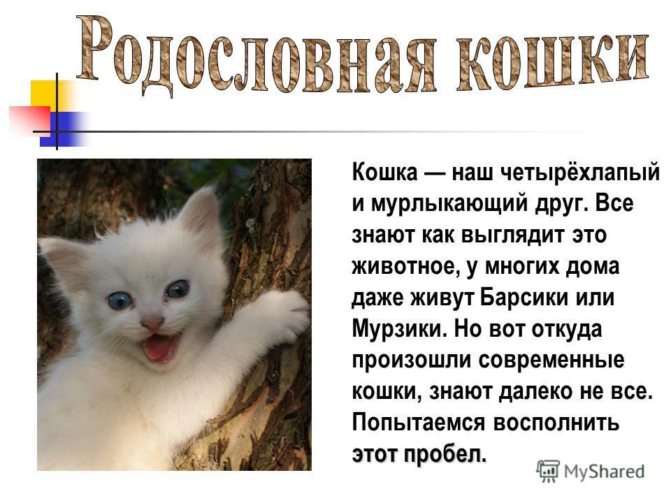 Кошка наш четырёхлапый и мурлыкающий друг. Все знают как выглядит это животное, у многих дома даже живут Барсики или Мурзики. Но вот откуда произошли современные кошки, знают далеко не все. Попытаемся восполнить этот пробел.
