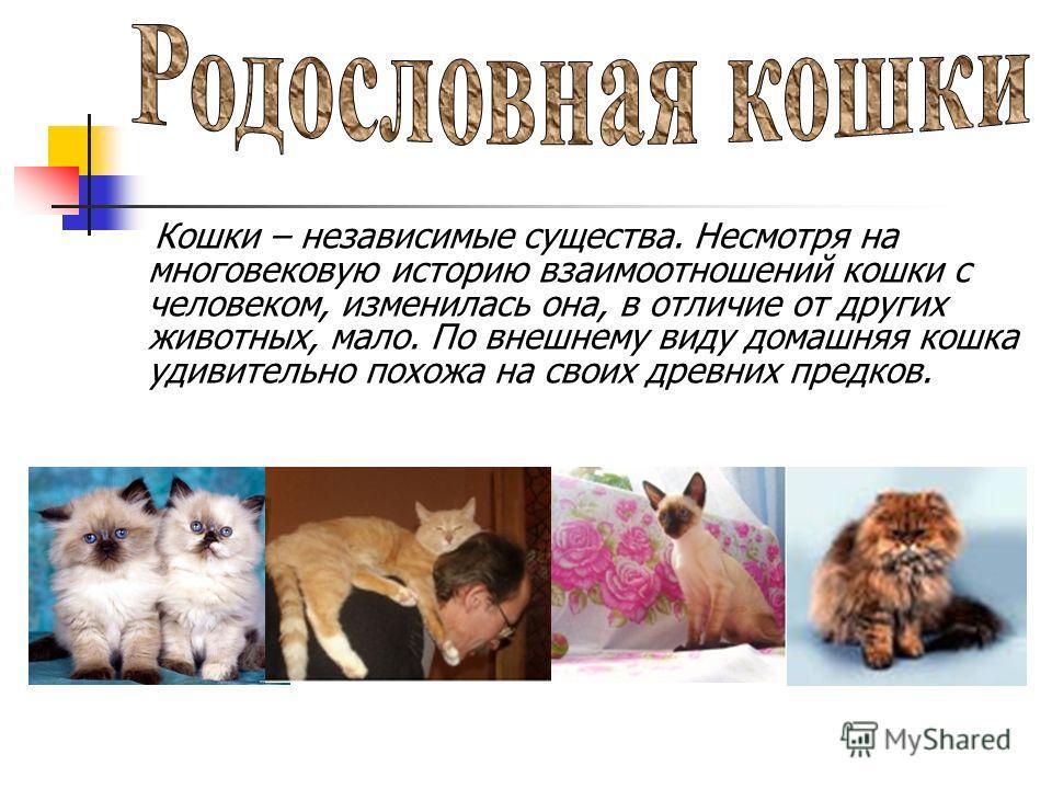 Кошки – независимые существа. Несмотря на многовековую историю взаимоотношений кошки с человеком, изменилась она, в отличие от других животных, мало. По внешнему виду домашняя кошка удивительно похожа на своих древних предков.