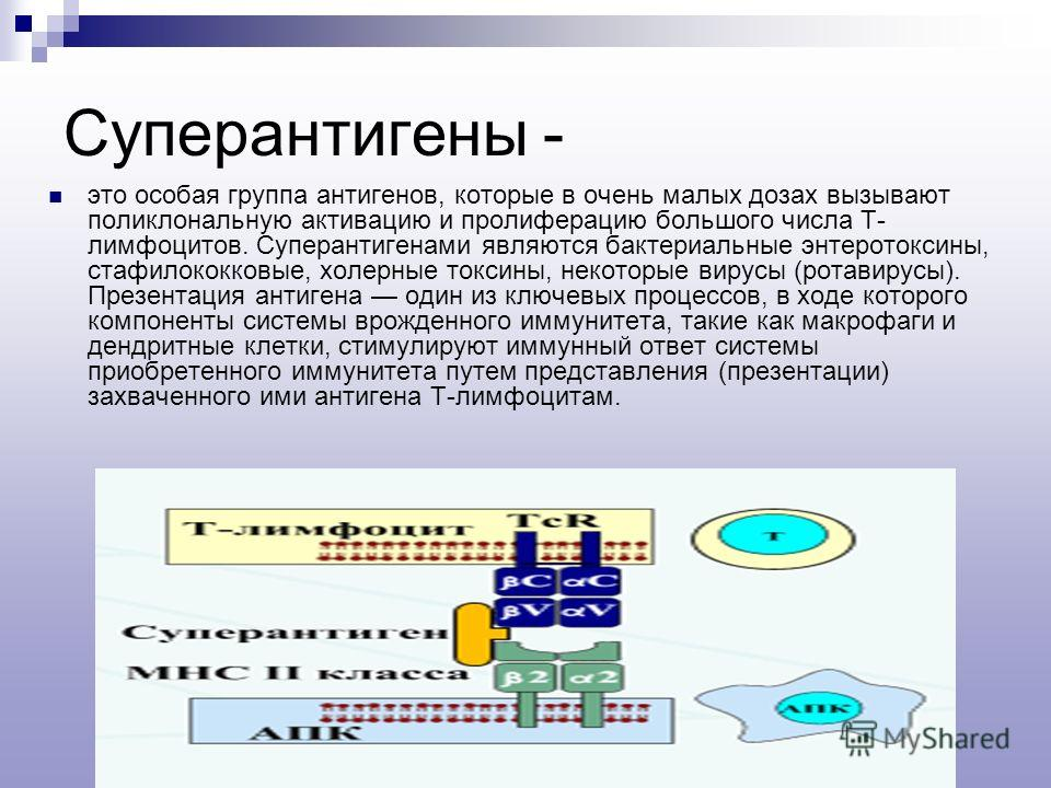 Суперантигены - это особая группа антигенов, которые в очень малых дозах вызывают поликлональную активацию и пролиферацию большого числа Т- лимфоцитов. Суперантигенами являются бактериальные энтеротоксины, стафилококковые, холерные токсины, некоторые