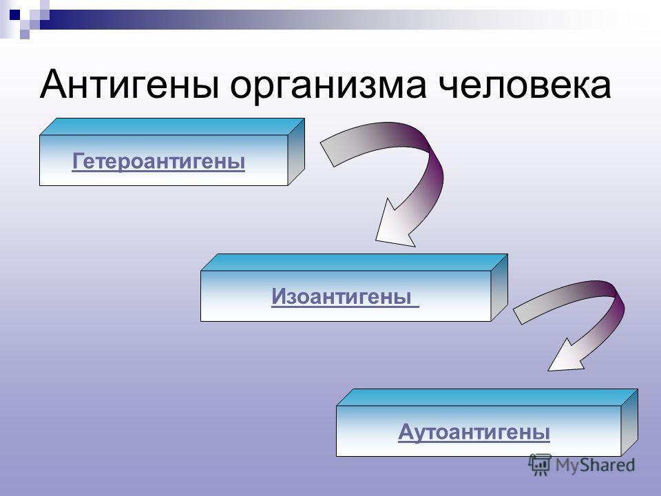Антигены организма человека Гетероантигены Изоантигены Аутоантигены