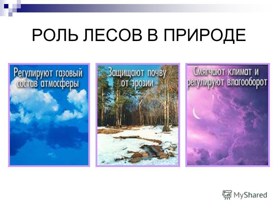 географические явления примеры 5 класс фото
