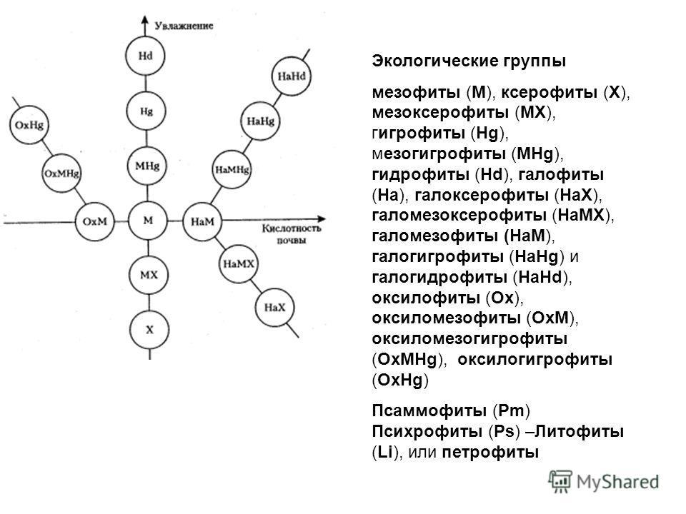 Экологические группы мезофиты (М), ксерофиты (X), мезоксерофиты (MX), гигрофиты (Hg), мезогигрофиты (MHg), гидрофиты (Hd), галофиты (Hа), галоксерофиты (НаХ), галомезоксерофиты (НаМХ), галомезофиты (НаМ), галогигрофиты (НаHg) и галогидрофиты (HaHd),