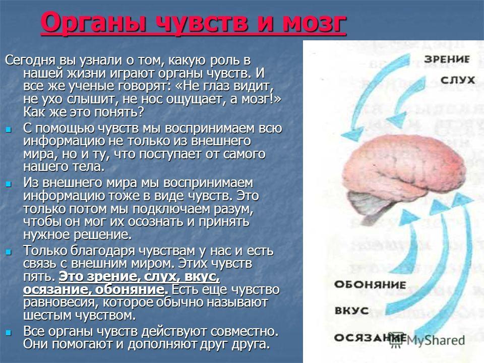 Органы чувств и мозг Сегодня вы узнали о том, какую роль в нашей жизни играют органы чувств. И все же ученые говорят: «Не глаз видит, не ухо слышит, не нос ощущает, а мозг!» Как же это понять? С помощью чувств мы воспринимаем всю информацию не только