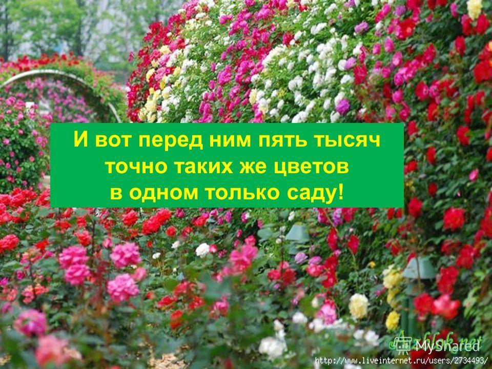 10.11.2013Агафонова Е.Е. И вот перед ним пять тысяч точно таких же цветов в одном только саду!