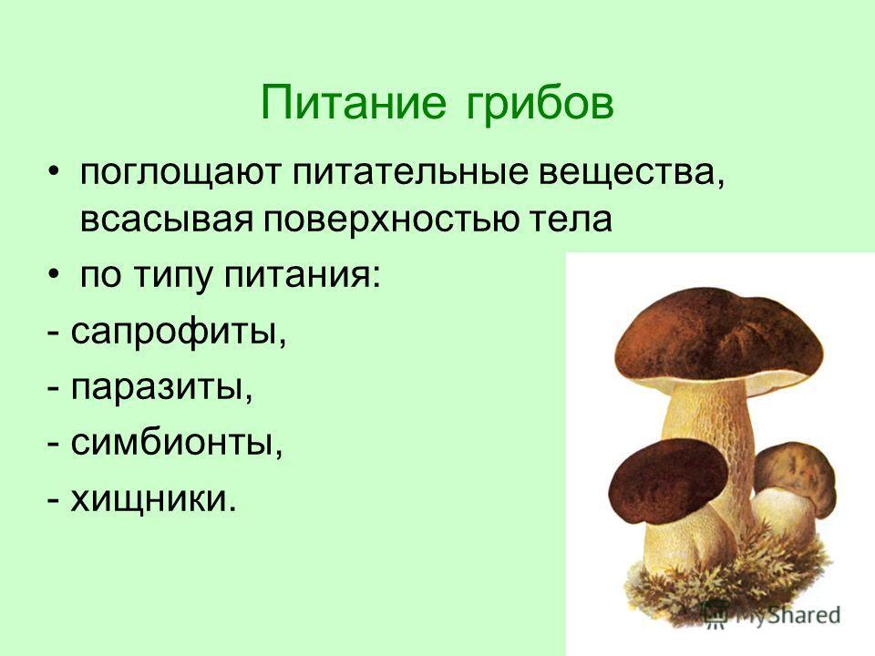 Питание грибов поглощают питательные вещества, всасывая поверхностью тела по типу питания: - сапрофиты, - паразиты, - симбионты, - хищники.