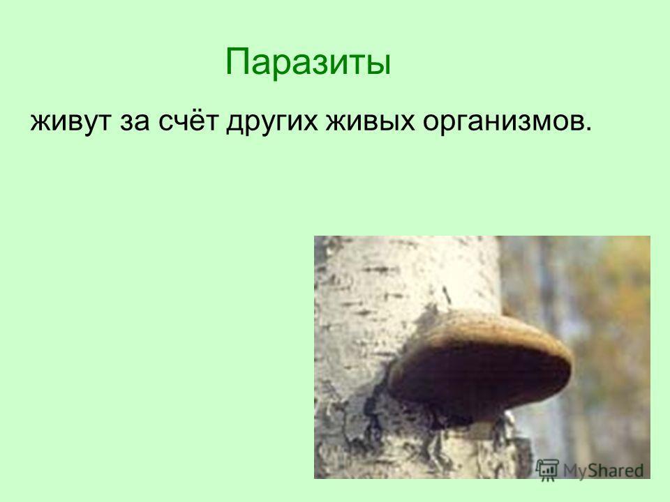 Паразиты живут за счёт других живых организмов.