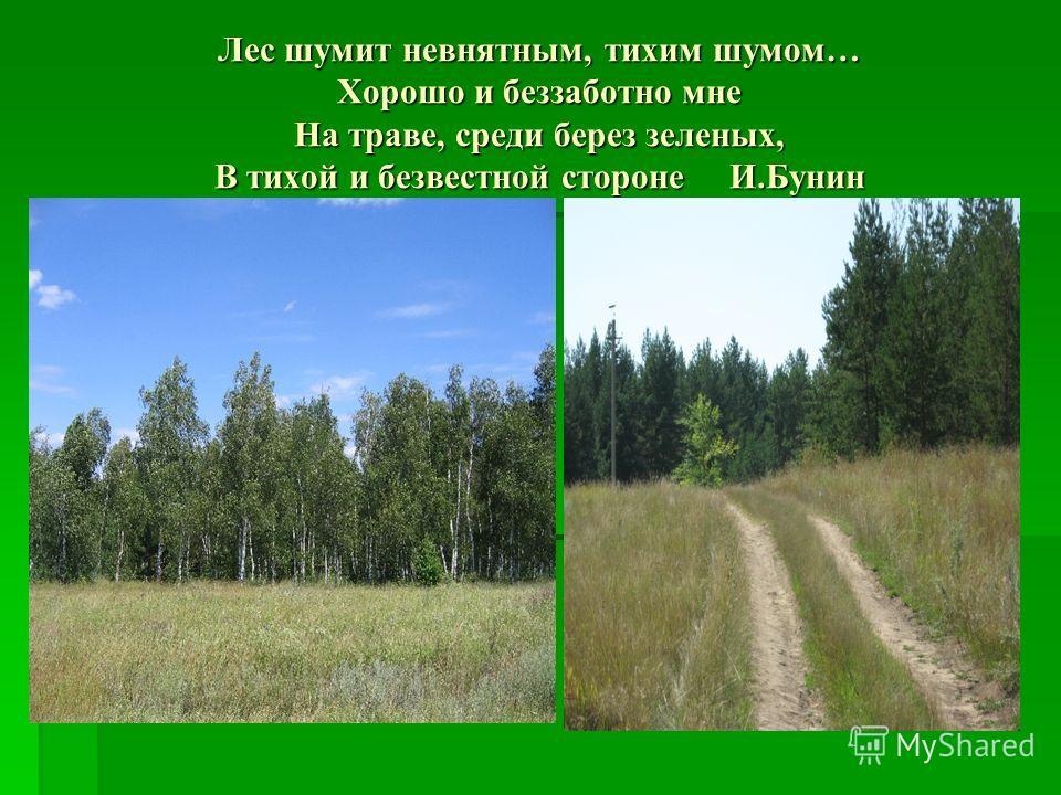 Лес шумит невнятным, тихим шумом… Хорошо и беззаботно мне На траве, среди берез зеленых, В тихой и безвестной стороне И.Бунин