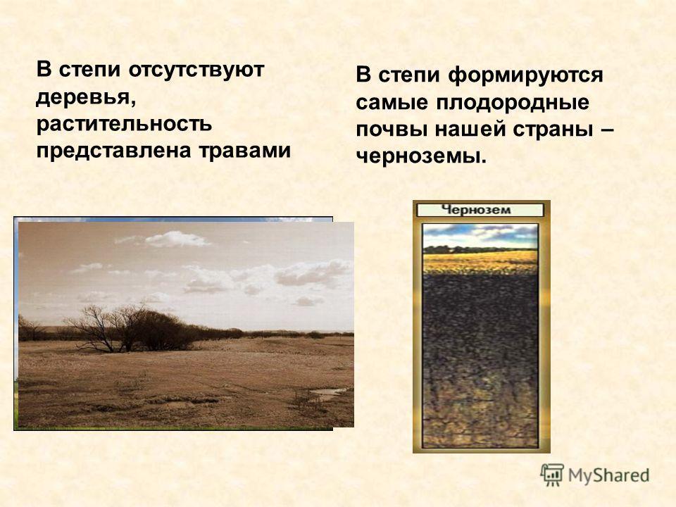 В степи отсутствуют деревья, растительность представлена травами В степи формируются самые плодородные почвы нашей страны – черноземы.