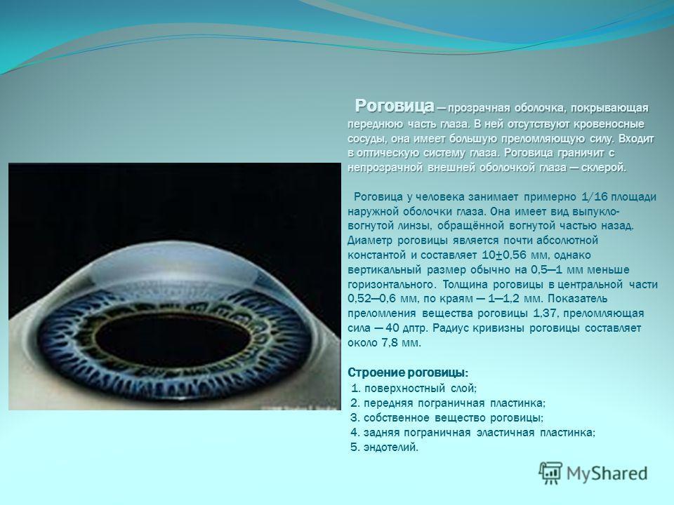 Роговица прозрачная оболочка, покрывающая переднюю часть глаза. В ней отсутствуют кровеносные сосуды, она имеет большую преломляющую силу. Входит в оптическую систему глаза. Роговица граничит с непрозрачной внешней оболочкой глаза склерой. Роговица п