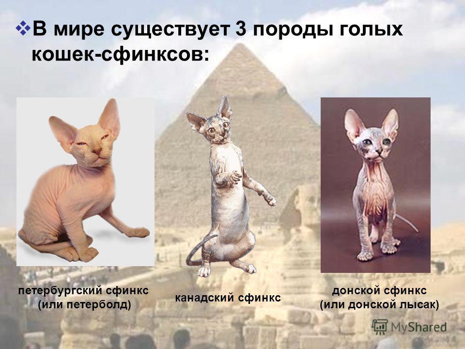 В мире существует 3 породы голых кошек-сфинксов: канадский сфинкс донской сфинкс (или донской лысак) петербургский сфинкс (или петерболд)