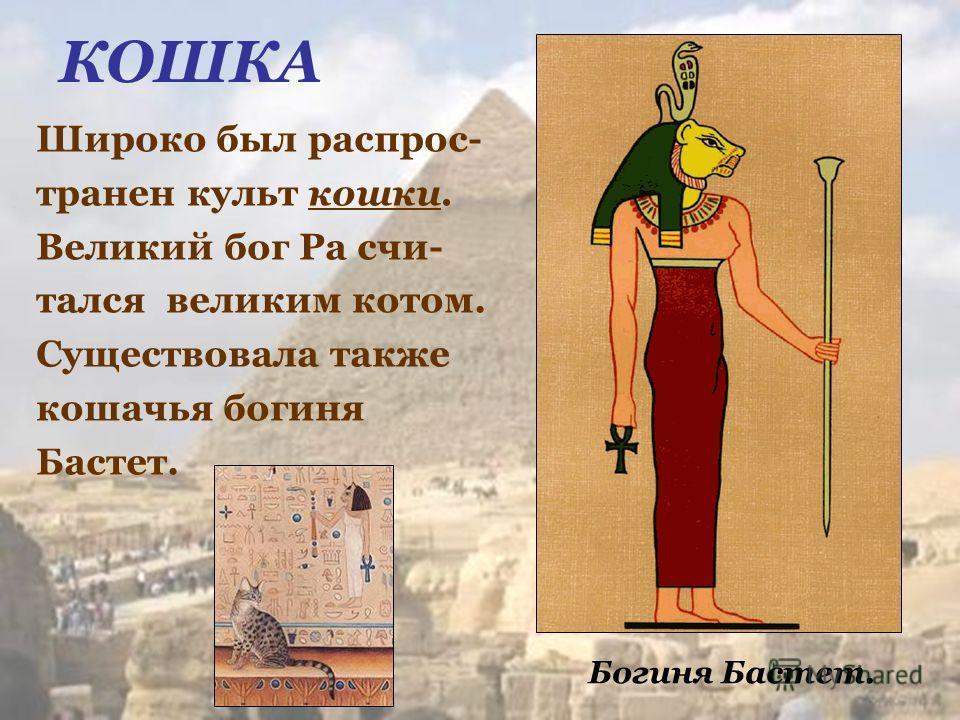 КОШКА Широко был распрос- транен культ кошки. Великий бог Ра счи- тался великим котом. Существовала также кошачья богиня Бастет. Богиня Бастет.