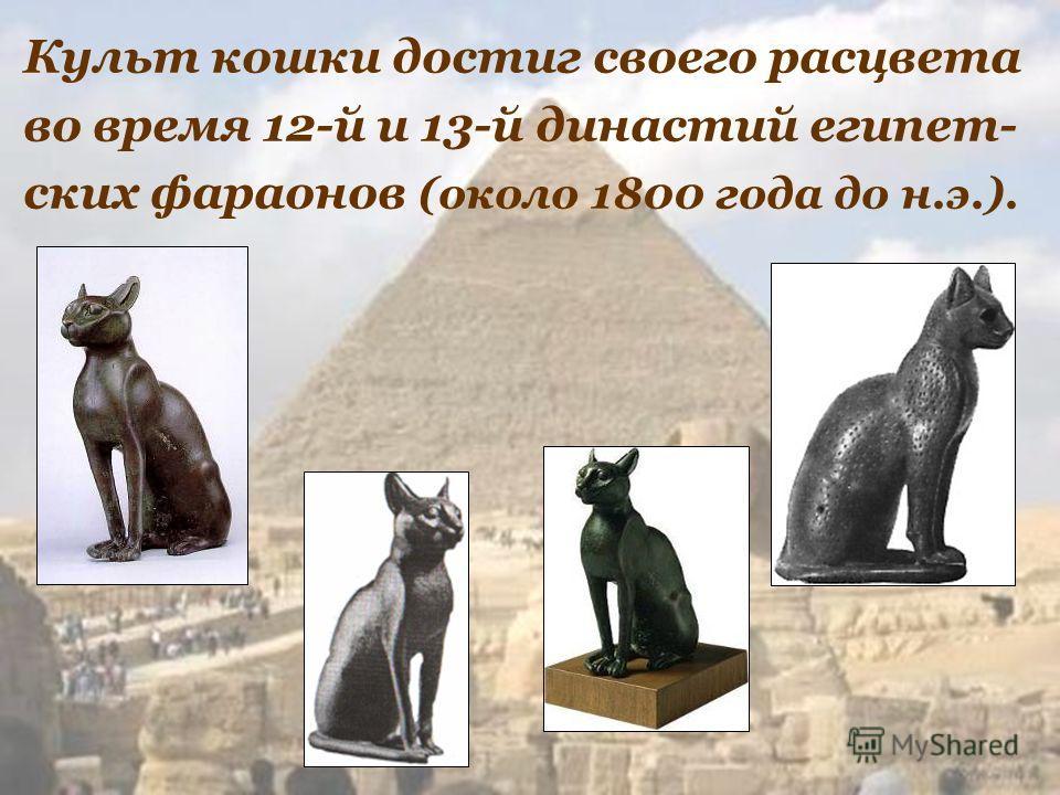 Культ кошки достиг своего расцвета во время 12-й и 13-й династий египет- ских фараонов (около 1800 года до н.э.).