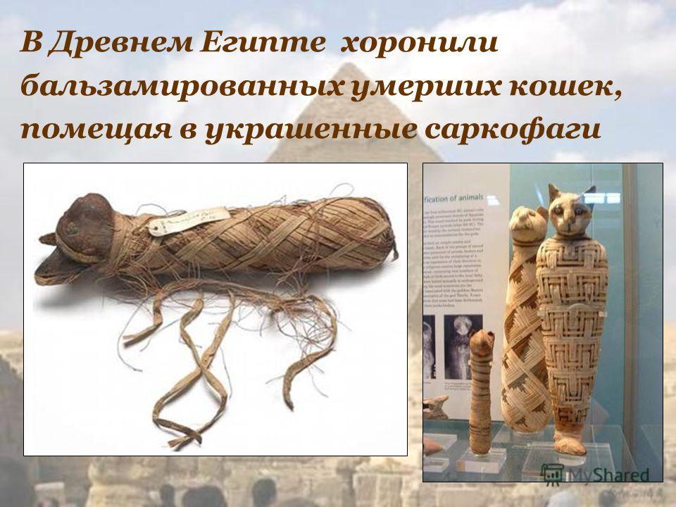 В Древнем Египте хоронили бальзамированных умерших кошек, помещая в украшенные саркофаги