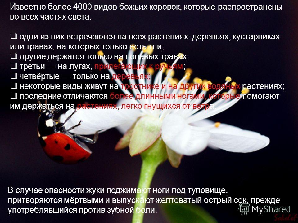 Известно более 4000 видов божьих коровок, которые распространены во всех частях света. одни из них встречаются на всех растениях: деревьях, кустарниках или травах, на которых только есть тли; другие держатся только на полевых травах; третьи на лугах,