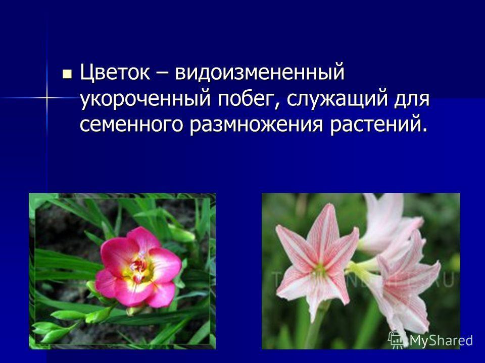 Цветок – видоизмененный укороченный побег, служащий для семенного размножения растений. Цветок – видоизмененный укороченный побег, служащий для семенного размножения растений.