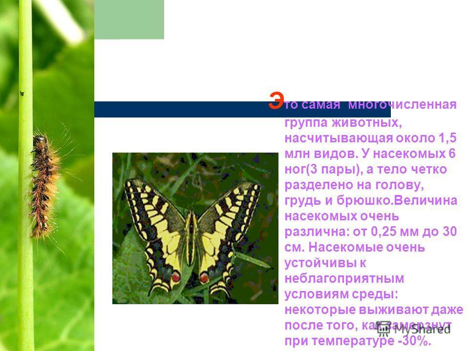 Э то самая многочисленная группа животных, насчитывающая около 1,5 млн видов. У насекомых 6 ног(3 пары), а тело четко разделено на голову, грудь и брюшко.Величина насекомых очень различна: от 0,25 мм до 30 см. Насекомые очень устойчивы к неблагоприят