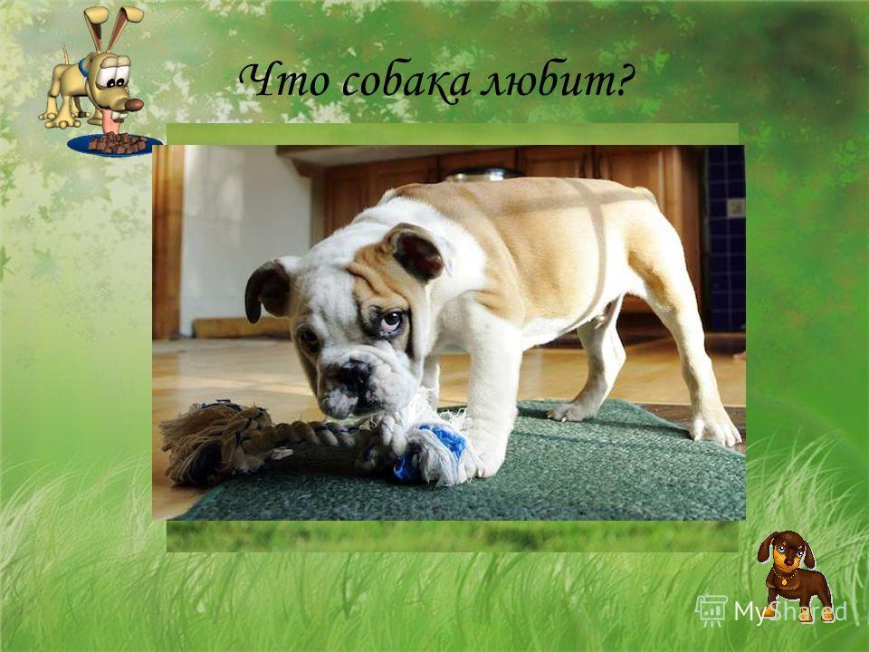 Что собака любит?