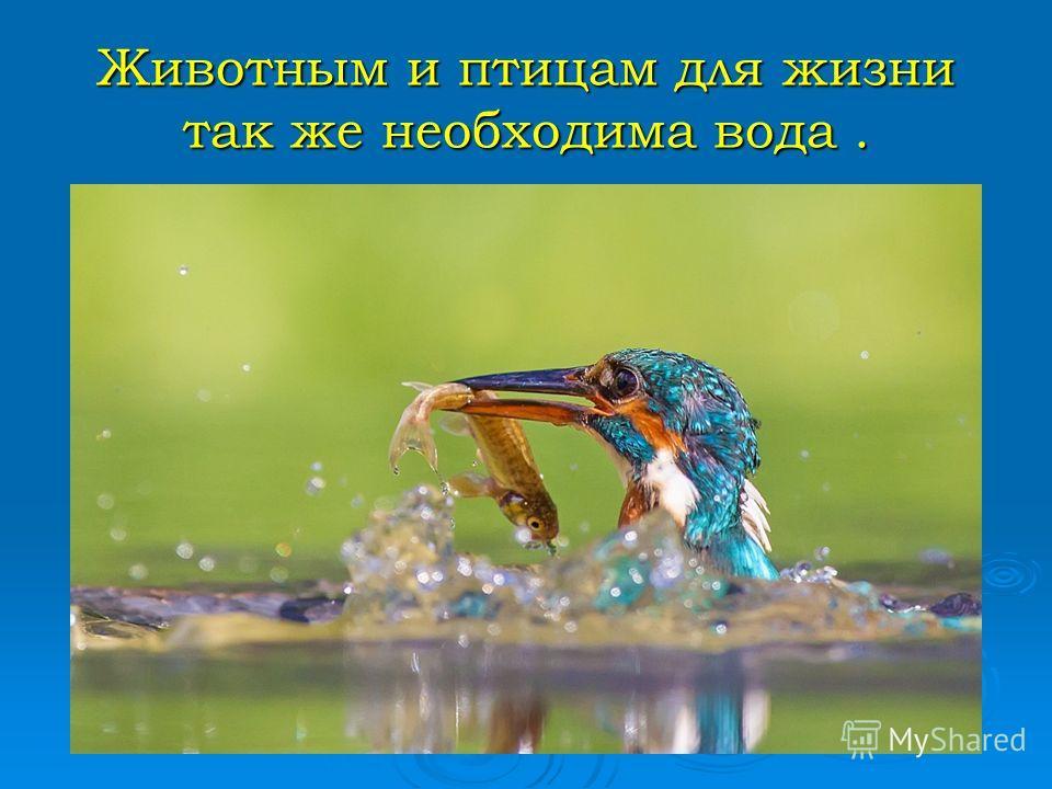 Животным и птицам для жизни так же необходима вода.