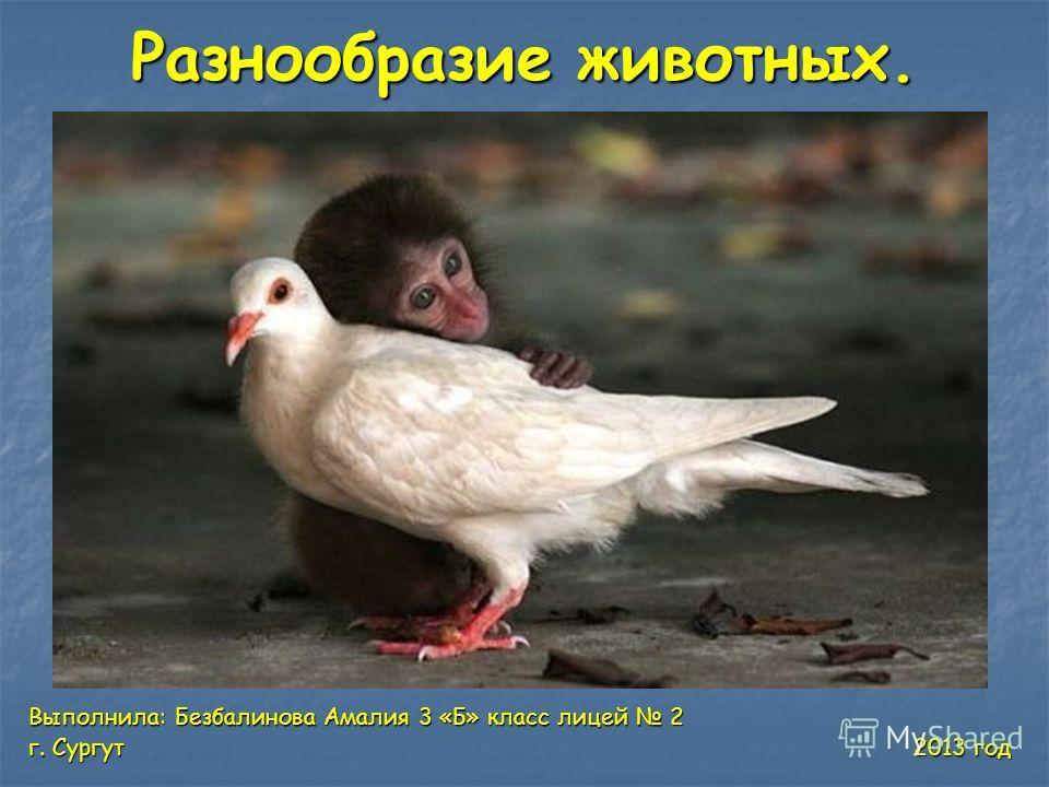 Разнообразие животных. Выполнила: Безбалинова Амалия 3 «Б» класс лицей 2 г. Сургут 2013 год
