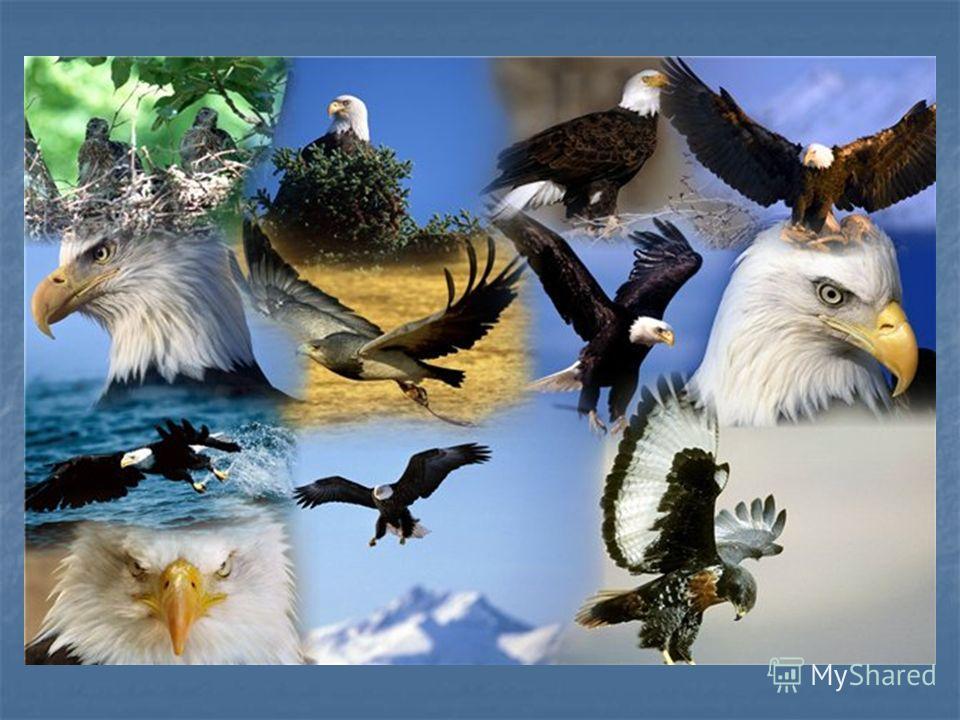 Разнообразие животных выполнила