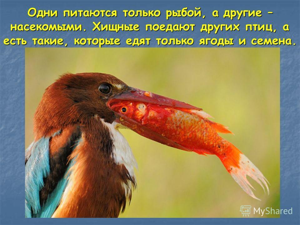 кошки едят не только мышей чайки ловят не только рыбу