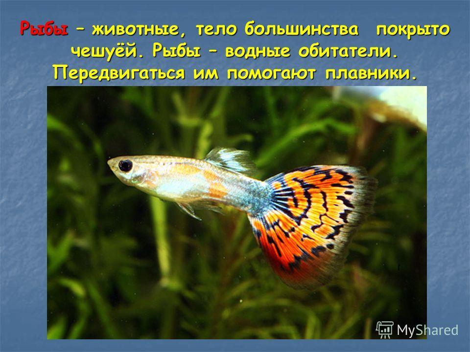 Рыбы – животные, тело большинства покрыто чешуёй. Рыбы – водные обитатели. Передвигаться им помогают плавники.