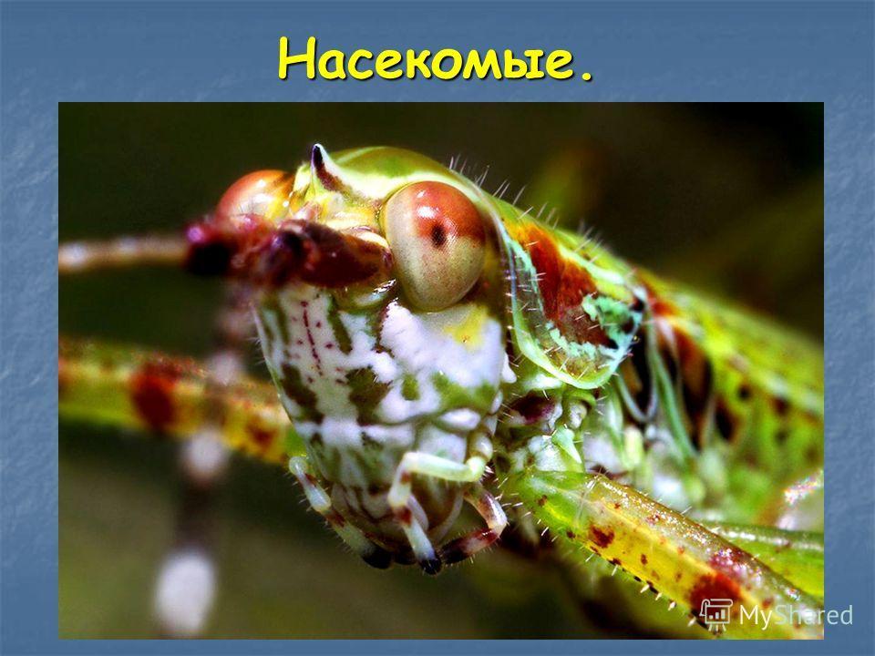 Насекомые слайд 22 насекомые это