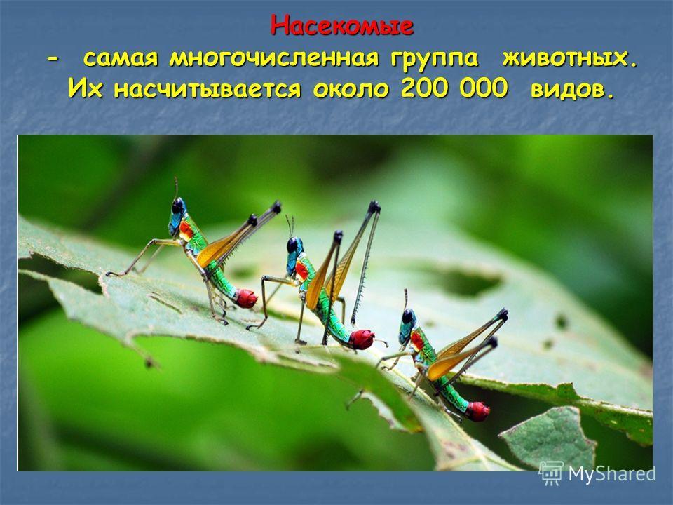 Насекомые - самая многочисленная группа животных. Их насчитывается около 200 000 видов.