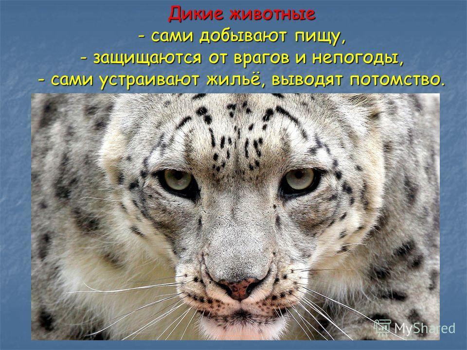 Дикие животные - сами добывают пищу, - защищаются от врагов и непогоды, - сами устраивают жильё, выводят потомство.