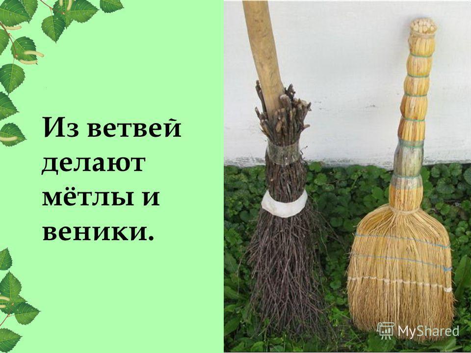 Из ветвей делают мётлы и веники.