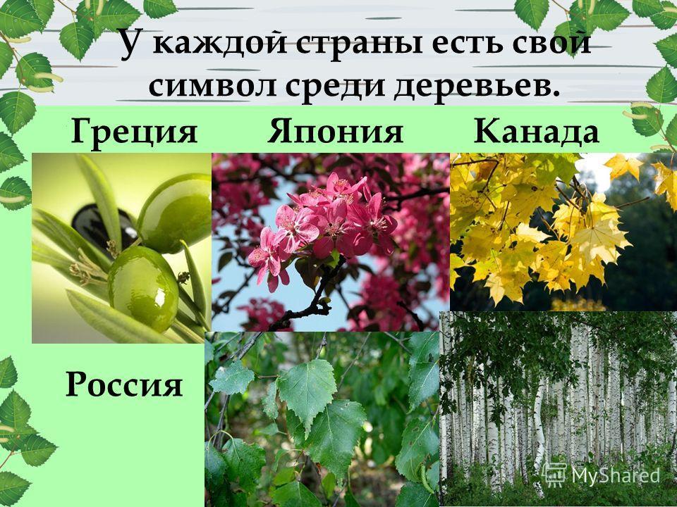 У каждой страны есть свой символ среди деревьев. КанадаЯпонияГреция Россия