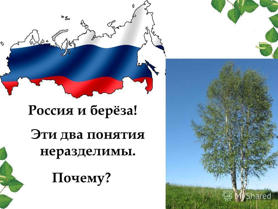 Россия и берёза! Эти два понятия неразделимы. Почему?