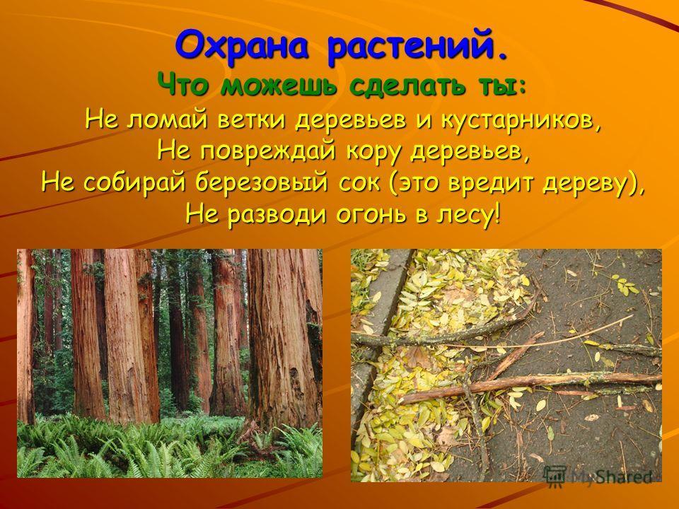 Охрана растений. Что можешь сделать ты : Не ломай ветки деревьев и кустарников, Не повреждай кору деревьев, Не собирай березовый сок (это вредит дереву), Не разводи огонь в лесу!